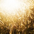Grass in the sun — Stock Photo #7319006