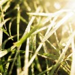 Grass in the sun — Stock Photo
