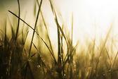 Grass in the sun — Stock Photo