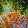 Stock Photo: Seasonal changes