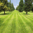 Lawn and trees in park — Stock Photo #7272557