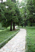 Stone road in the forest park — Stock Photo