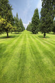 Lawn and trees in the park — Stock Photo