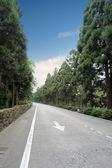 Camino por el bosque — Foto de Stock