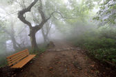 Chair and hiking trail in the fog — Stock Photo