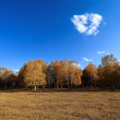 Autumn birch forest and cloud — Stock Photo