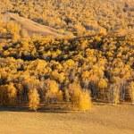 Autumn birch forest — Stock Photo #7544483