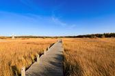Footbridge across the wetland at autumn — Stock Photo