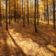 Autumn woods — Stock Photo