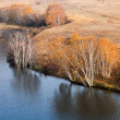 Autumn birch trees in waterside — стоковое фото #7552899
