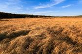 Autumn wetland — Stock Photo