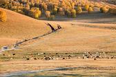 Jesień pastwiska — Zdjęcie stockowe