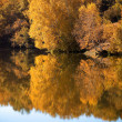 Woods lake in autumn — Stock Photo