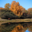 Autumn scenery in lake — Stock Photo