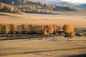 Prateria d'autunno — Foto Stock