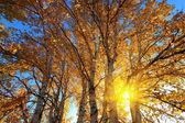 Ensemble coeurs doodles mignonlumière du soleil derrière le bouleau en automne — Photo