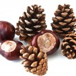 Brown pine cones scattered on white background — Stock Photo #7458668