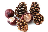 Brown pine cones scattered on a white background — Stock Photo