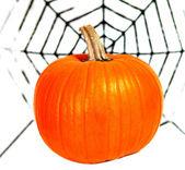 Halloween zucca e spider web — Foto Stock