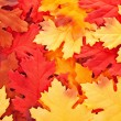 Background of silk colorful autumn leaves - Stock Photo