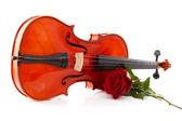 Violino e rose — Foto Stock