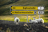 Sheeps are resting under signpost — Stock Photo