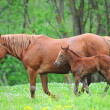 Mares and foals in the — Stock Photo #6829910