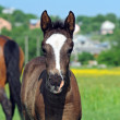 Mares and foals in the — Stock Photo #6829992