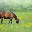 Stock Photo: Mares and foals in the