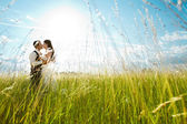 Kissing bride and groom in sunny grass — Stok fotoğraf