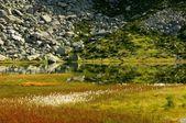 Atoleiro no vale glaciar — Foto Stock
