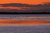 Detail of sunset on a Camargue lagoon — Stock Photo