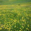 Flowery meadow in Val Gardena — Stock Photo #6861980