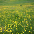 Flowery meadow in Val Gardena — Stock Photo
