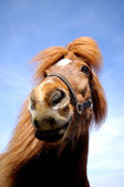 Horse face and blue sky. — Stock Photo