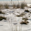 Stock Photo: Winter by beach