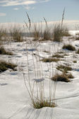 Winter by the beach — Stock Photo