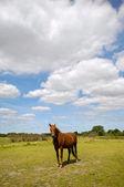 緑の野原に馬 — ストック写真