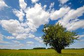 Träd på fältet — Stockfoto