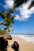 Exotic beach — Stock Photo