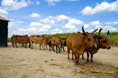 Trabalho de cavalos — Foto Stock