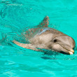 Dolphin swimming in water - Stock Photo