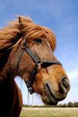 Yüz bir meraklı at. — Stok fotoğraf