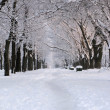 Park at winter — Stock Photo #7916350
