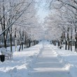 Snowy avenue — Stock Photo #7916356