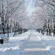 Snowy avenue — Stock Photo