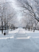 Avenue in winter day — Stock Photo