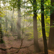 Stock Photo: Sun beams in forest