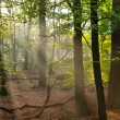 Sun beams in the forest — Stock Photo