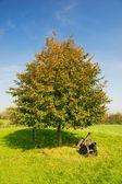 Canoni sotto l'albero — Foto Stock